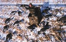 Canada Goose Hunting
